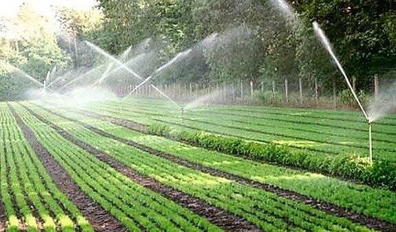 Для выращивания более рентабельных культур в Казахстане необходима система орошения