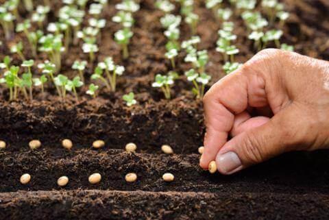 Из-за неблагоприятных погодных состояний сев озимой пшеницы в Казахстане продвигался медленно