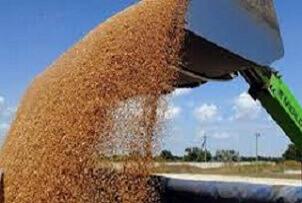 Кировоградская область (Украина) собрала 1 млн. т. зерна