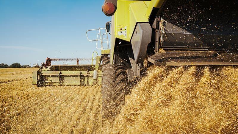 Качество собранной пшеницы в России улучшается